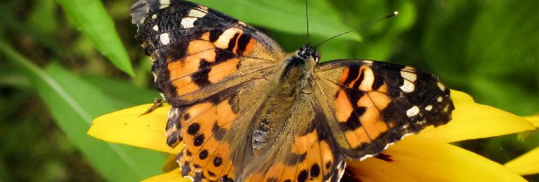 Βροχή από πεταλούδες στην Κύπρο