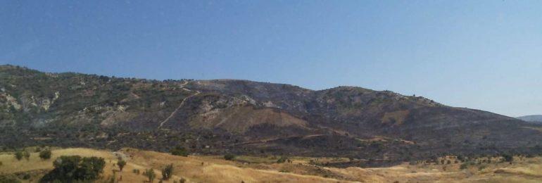 Θετικά τα τελευταία νέα από τη μεγάλη πυρκαγιά στη Σαλαμιού