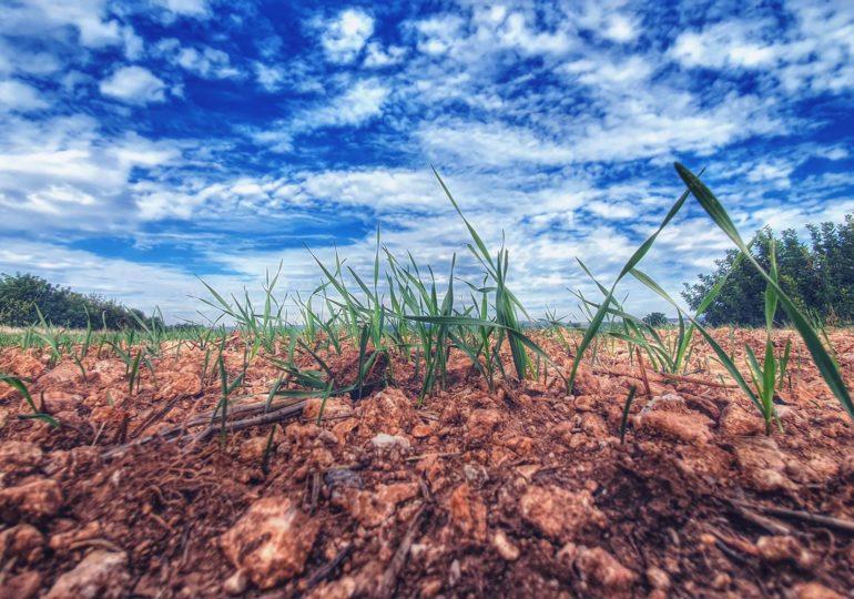 Αγρομετεωρολογικό δελτίο - Θέμα: Σπορά (2)