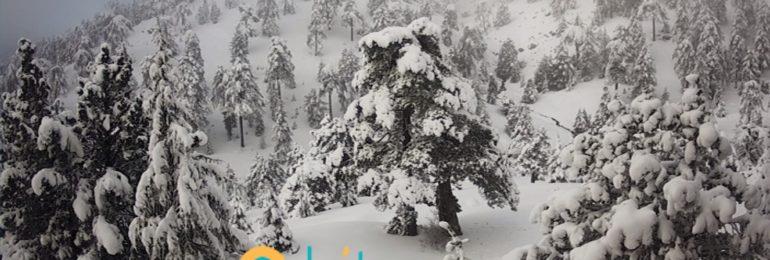 Κατάσταση οδικού δικτύου στο Τρόοδος και ύψος χιονιού - Ενημέρωση ώρα (06:20)