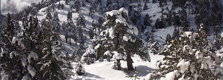 Κατάσταση οδικού δικτύου στο Τρόοδος και ύψος χιονιού - Ενημέρωση ώρα (10:57)