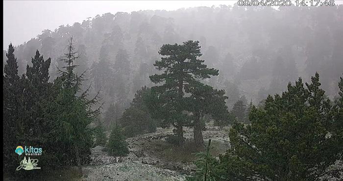Πυκνή χιονόπτωση με χιονόστρωση αυτή την στιγμή στο Τρόοδος