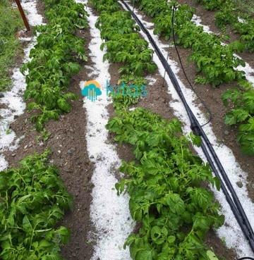 Σοβαρές ζημιές σε γεωργικές καλλιέργειες από τις σημερινές χαλαζοπτώσεις (Εικόνες - Βίντεο)